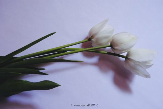 white-tulips-lalele-albe