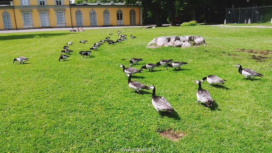 Hagaparken birds
