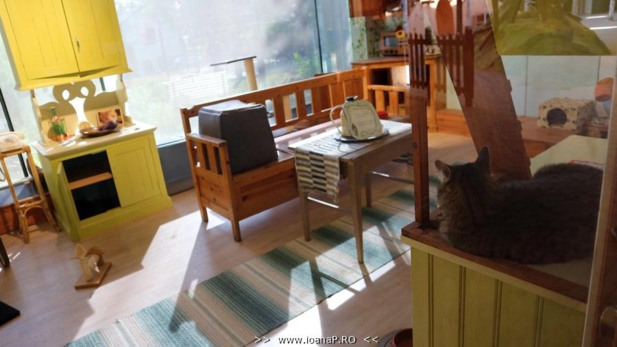 Skansen cat room