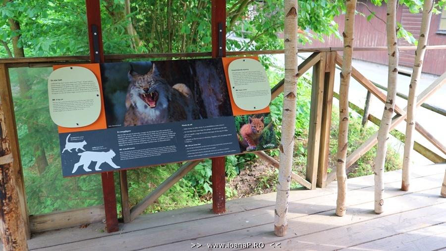 Skansen museum and zoo lynx info