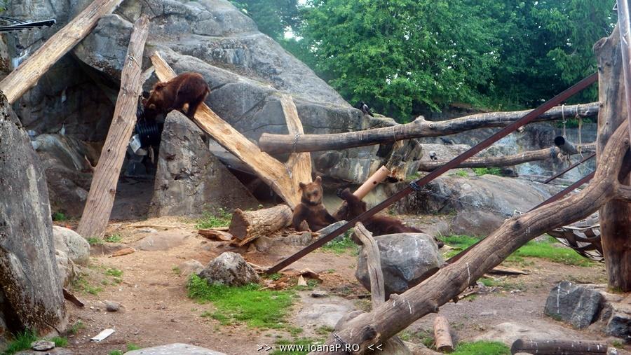 Skansen open air museum and zoo bears