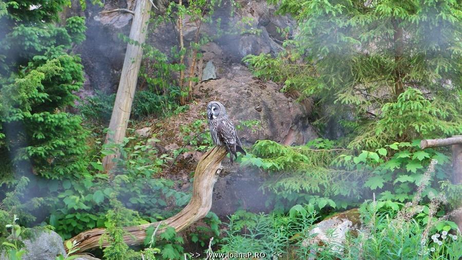 Skansen open air museum beautiful owl