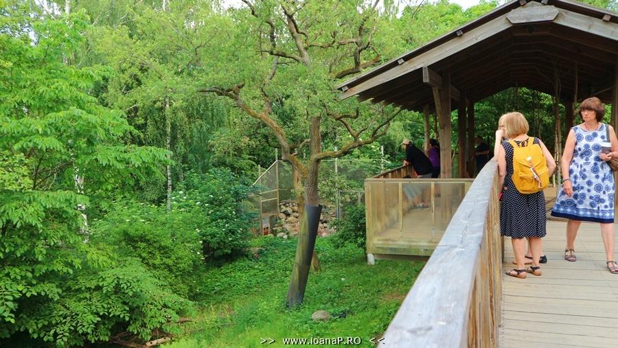 Skansen zoo lynx area